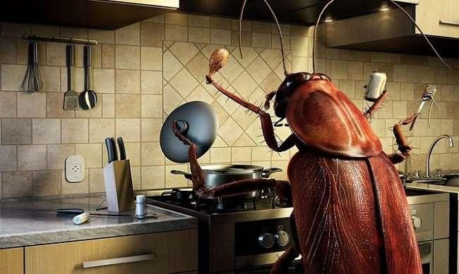 Кто завозит тараканов в Россию-4 фото-