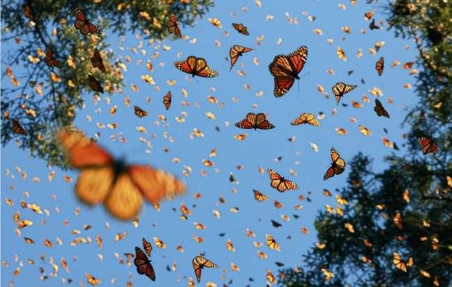 Фотограф объехал полмира, чтобы запечатлеть животных, которые вот-вот исчезнут слица Земли