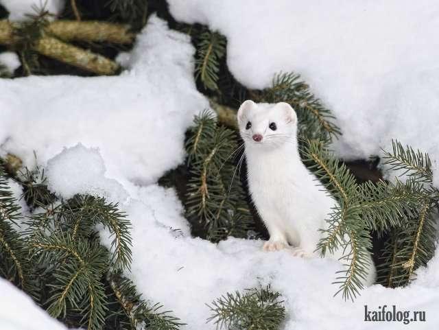 Настоящая красивая зима (55 фото)