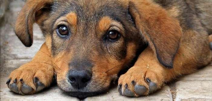 Усилена уголовная ответственность за жестокое обращение с животными-1 фото-