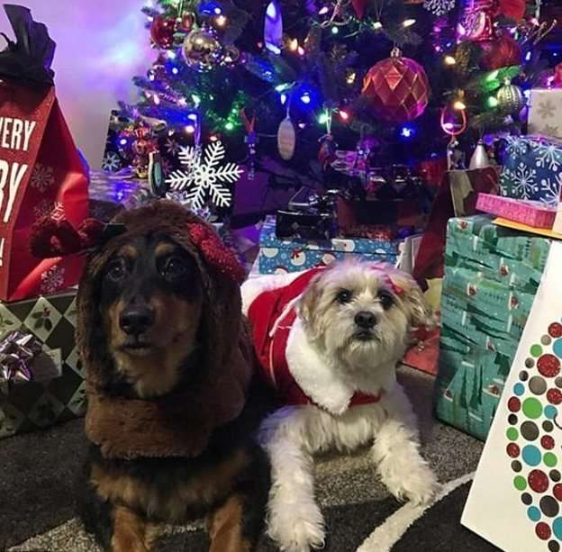 Праздник к нам приходит: очаровательные питомцы в рождественских нарядах-28 фото-