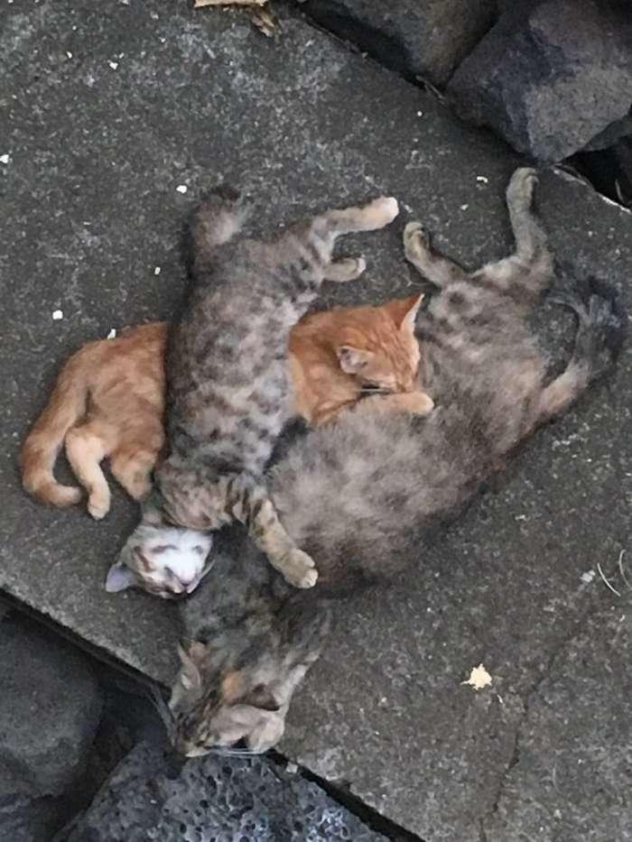 Бродячая кошка пришла к двери с двумя котятами, и вскоре… удивила хозяев сюрпризом-11 фото-