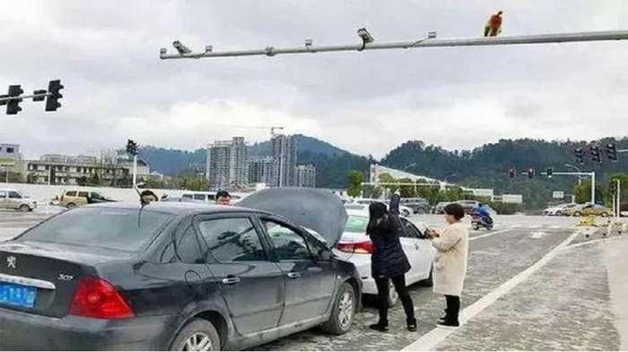 Китаянка устроила ДТП, перепутав зад обезъяны со светофором-3 фото-