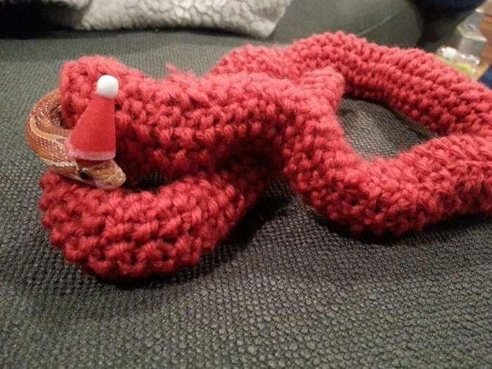 Девушка связала для домашней змеи восхитительный рождественский свитер-8 фото + 1 видео-