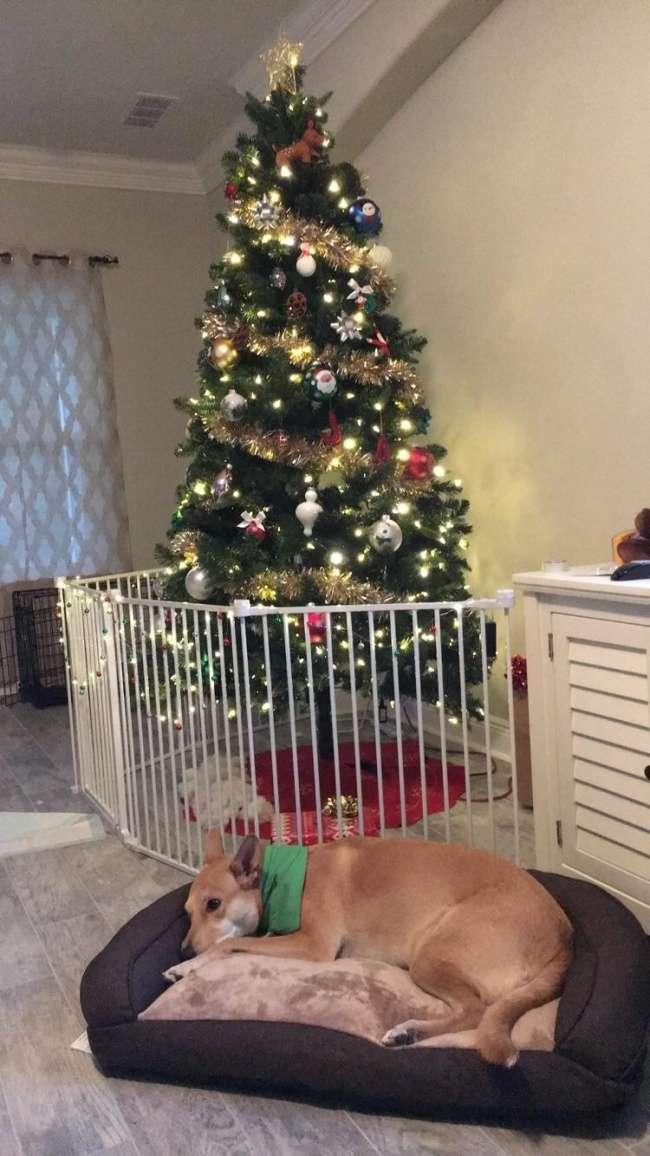 20человек, которые своими хитроумными решениями испортили новогоднее настроение маленьким разрушителям
