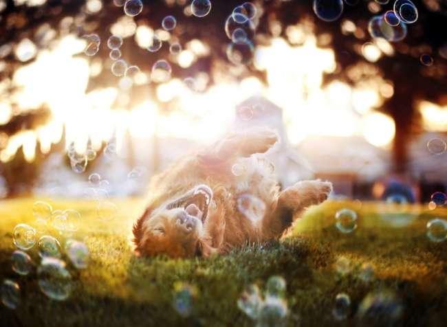 22песика, которые помогут вам улыбнуться иощутить атмосферу Нового года