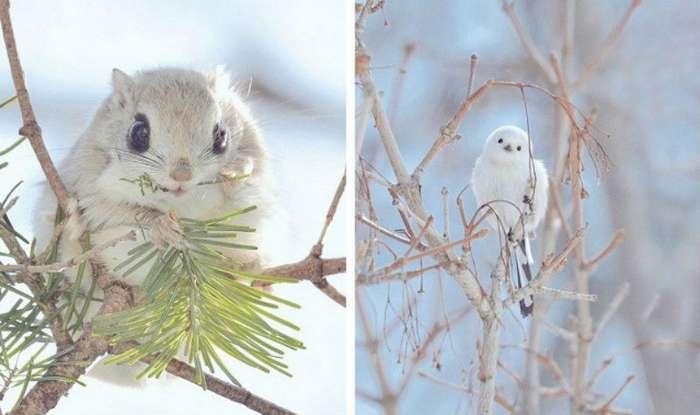 Самые мимишные животные с острова Хоккайдо