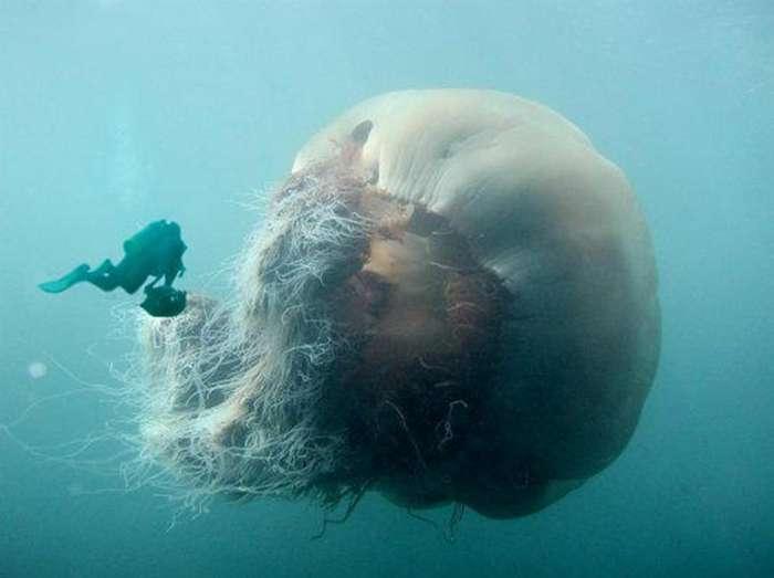 Самые устрашающие твари из морских пучин