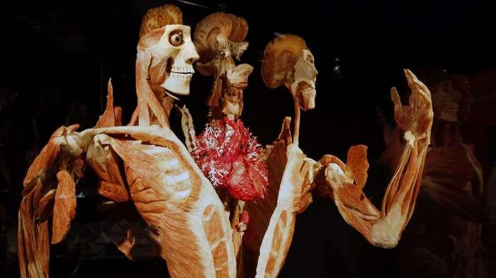 -Мой труп не сгниет напрасно!-, или что будет с вами после смерти, если вы решите завещать свое тело науке?
