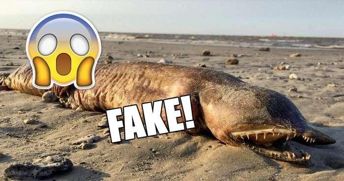 -Фэйк или нет?-. Развенчиваем мифы о нескольких странных подводных монстрах, фотографии которых стали в интернете вирусными