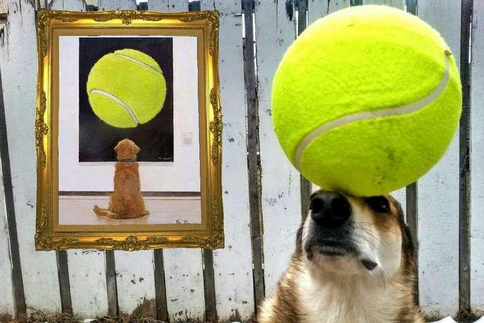 Пес Тоби демонстрирует чудеса балансировки
