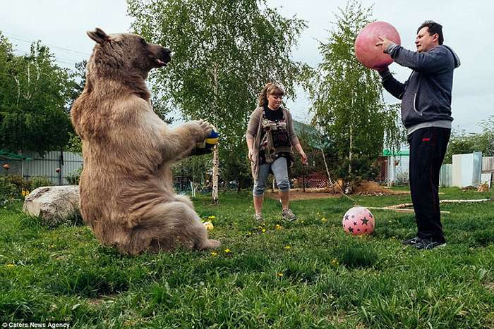 Жизнь плюшевого зверя в российской семье