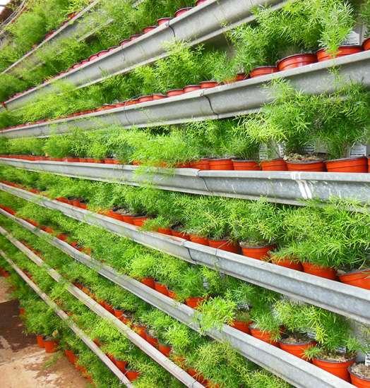20 идей вертикального озеленения не только на дачном участке, но и на балконе