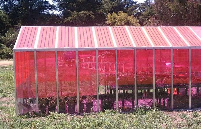 Мечта дачника: Создано стекло для теплиц, вырабатывающее электричество