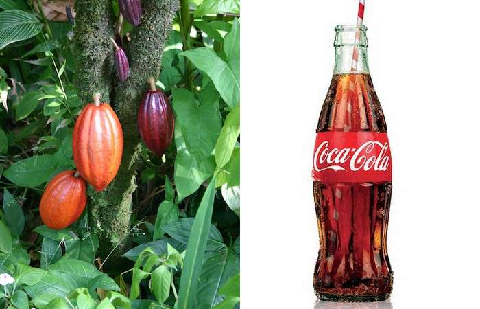 15 малоизвестных фактов о Coca-Cola: Почему бывшее лекарство с содержанием кокаина теперь хорошо выводит пятна на одежде