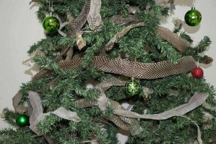 Колоритная рождественская елка в Австралии