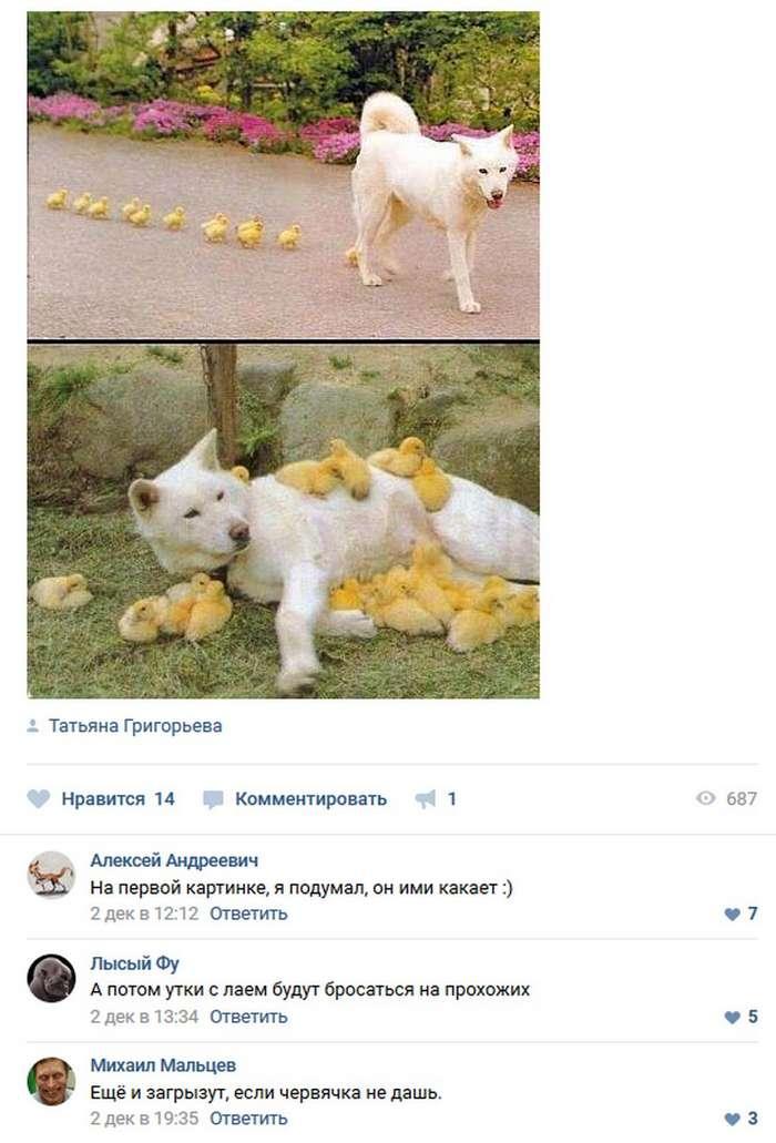Забавные комментарии 08.12.17