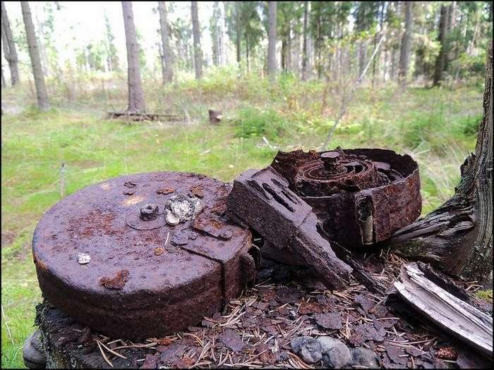 Фронтовой лес