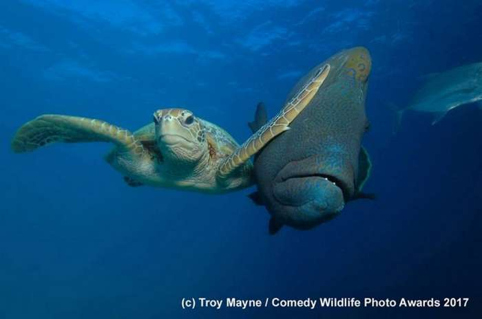 Забавная мышь, боевая черепаха и другие призеры конкурса