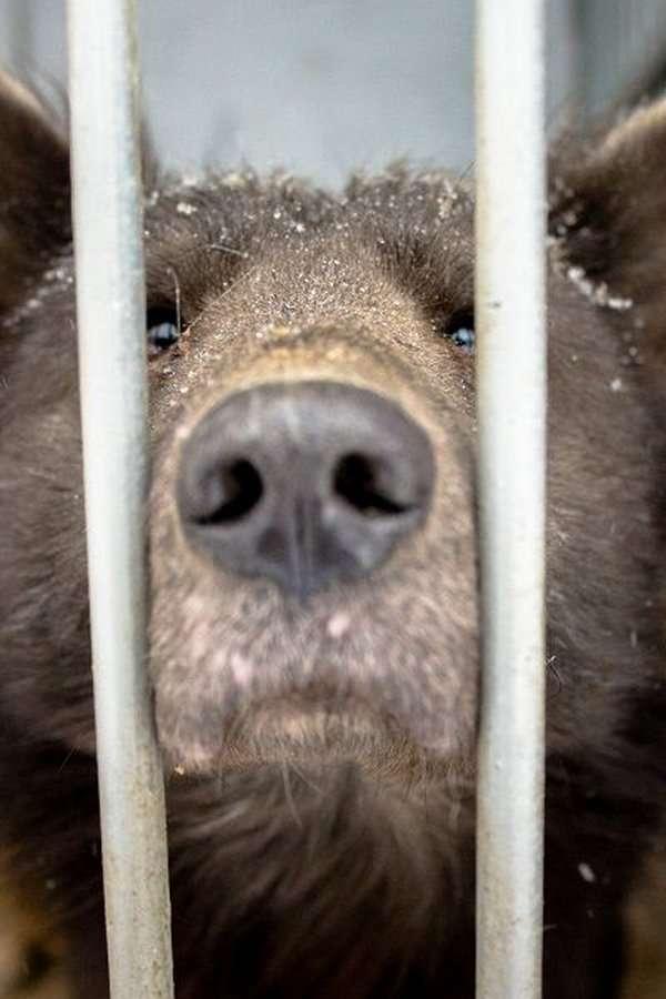 Медвебака &8212; необычный пес из приюта Челябинска