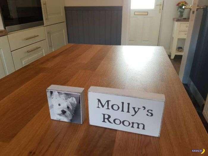 Домик для Молли