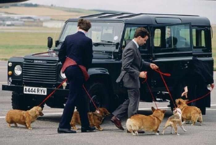 Любимые собачки королевы Великобритании - корги (39 фото)