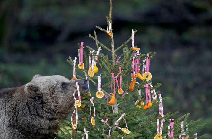 У животных тоже Новый Год (14 фото)