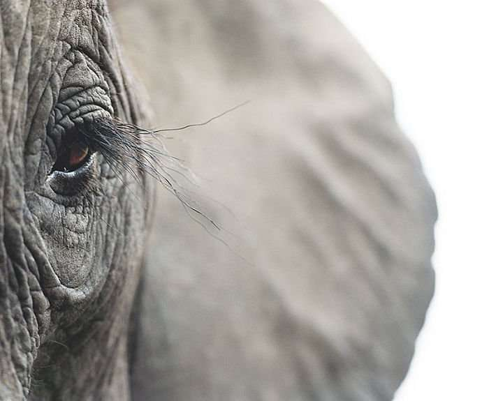 Британец фотографирует исчезающие виды, и это разрывает сердце (20 фото)