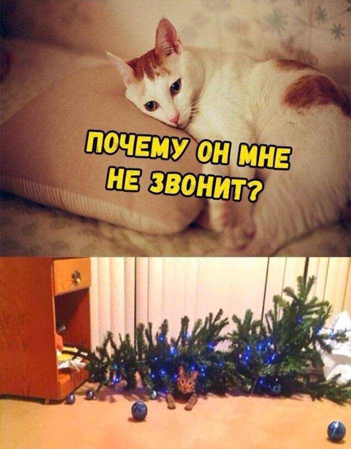 Новогодние приколы в картинках (38 фото)