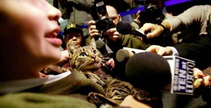 Домашние животные, которые нашли путь домой, несмотря на большие расстояния и препятствия (10 фото)