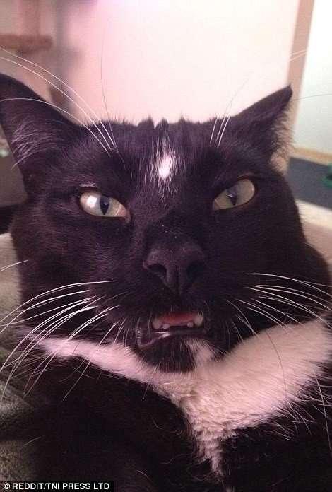 Да, оказывается, котики тоже могут быть нефотогеничными! (25 фото)