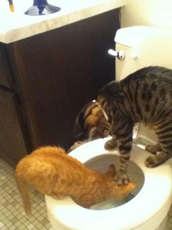 Забавные и милые котики (25 фото)