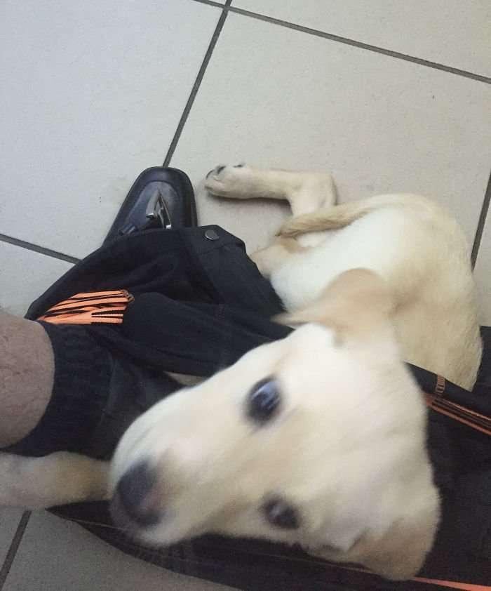 Парень делится фотографиями своего щенка, и это довело интернет до истерики (16 фото)