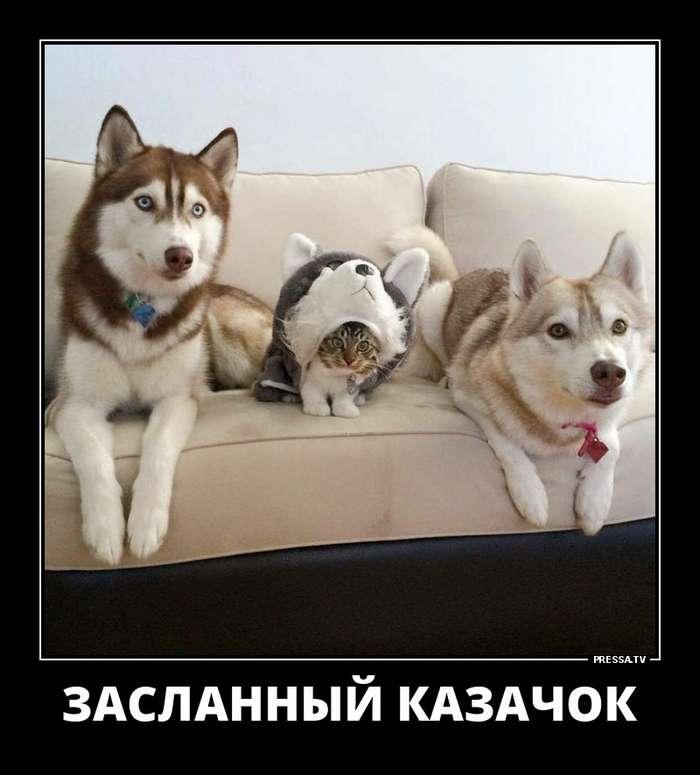 Новые смешные жизненные демотиваторы (45 фото)