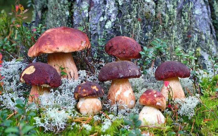 О грибах, и не только. Армейская история