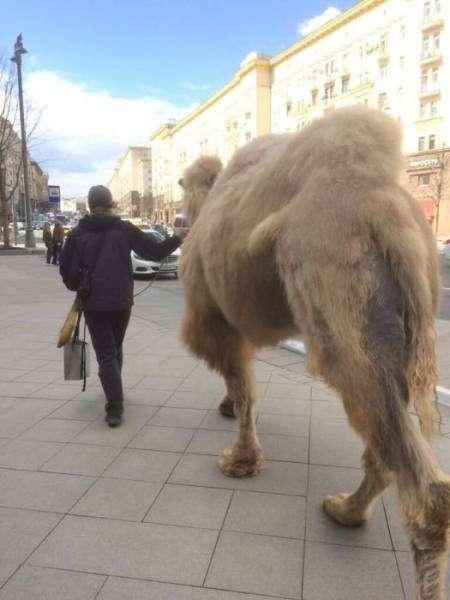Прикольные фотографии из России (41 фото)