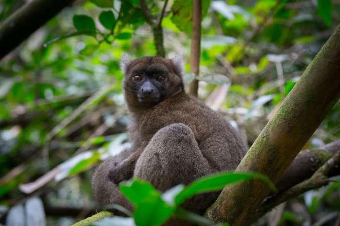 Невероятный остров Мадагаскар (34 фото)