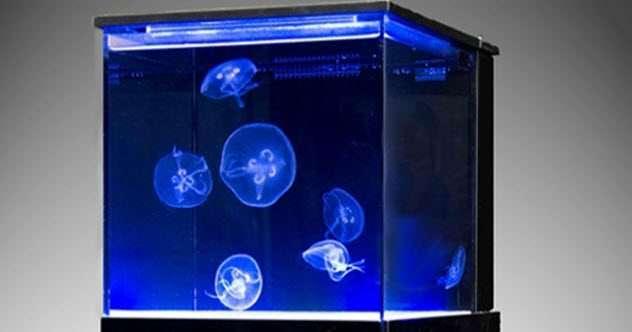Необычное применение медуз (10 фото)