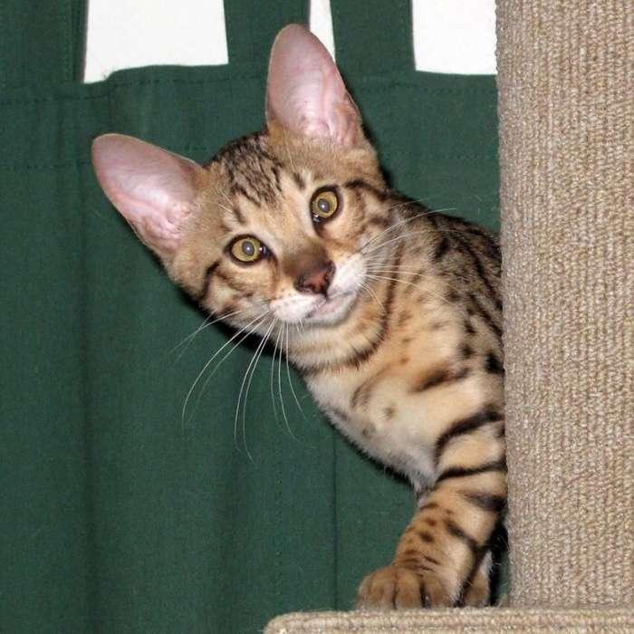 Беседка для безопасного выгула кошек (16 фото)