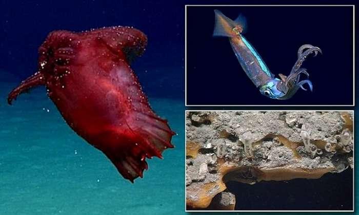 Безголовый куриный монстр и другие находки исследователей глубин-9 фото + 1 видео-