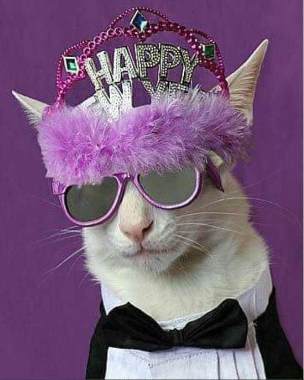 Новогодние коты-28 фото-