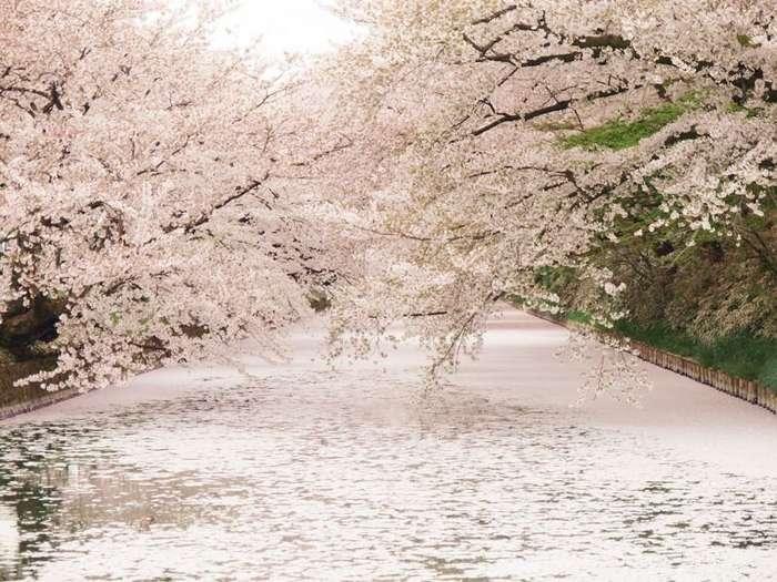 Город Хиросаки в Японии-26 фото-