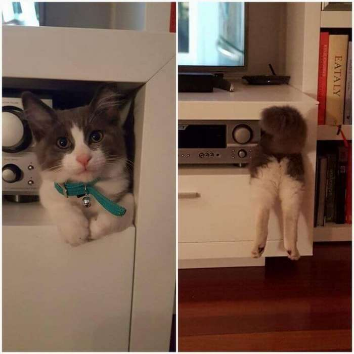 16 доказательств того, что коты растут ну очень быстро-16 фото-