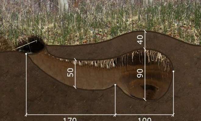Как выглядит берлога медведя-3 фото + 1 видео-