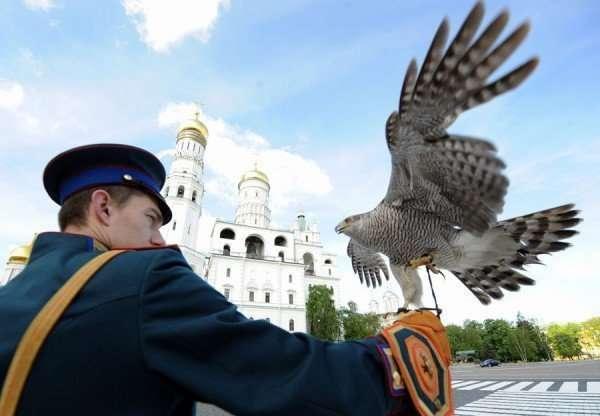 Животные на военной службе-33 фото-