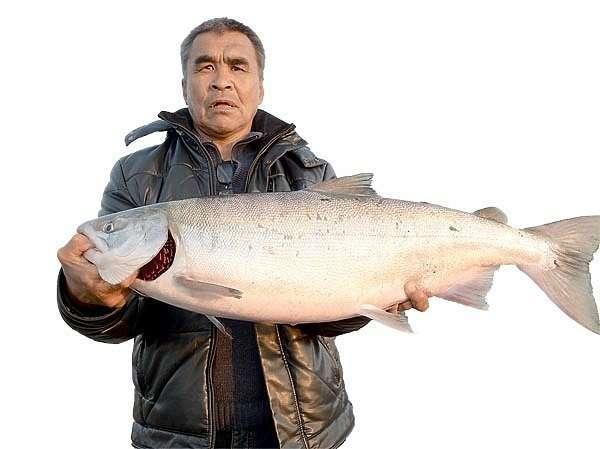 Рыбалка в Анадыре: лосось уходит на корм чайкам-9 фото-