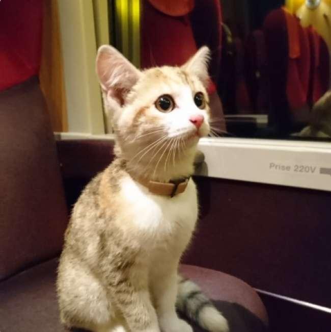 Потерявшийся котенок впоисках хозяйки проехал 20км напоезде. Инашелее!