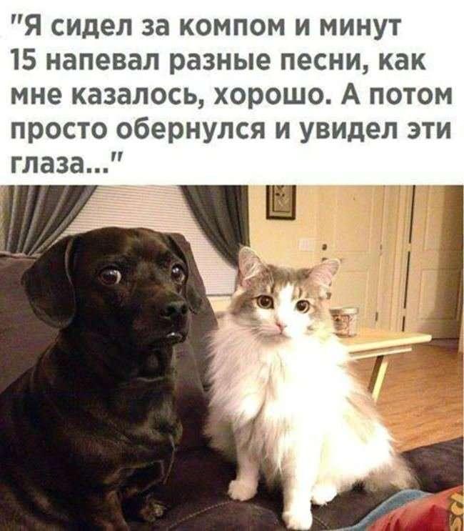Народный юмор в веселых фото-29 фото-