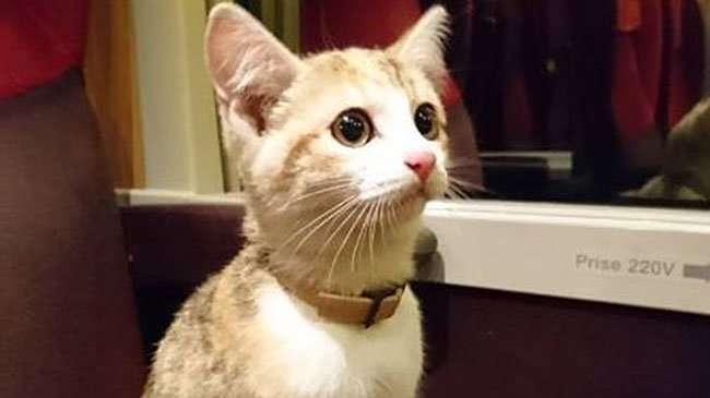 Отважный котенок вернулся к своей французской хозяйке на поезде-3 фото-