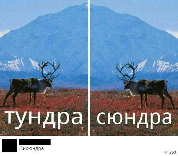 Смешные комментарии из социальных сетей-36 фото-